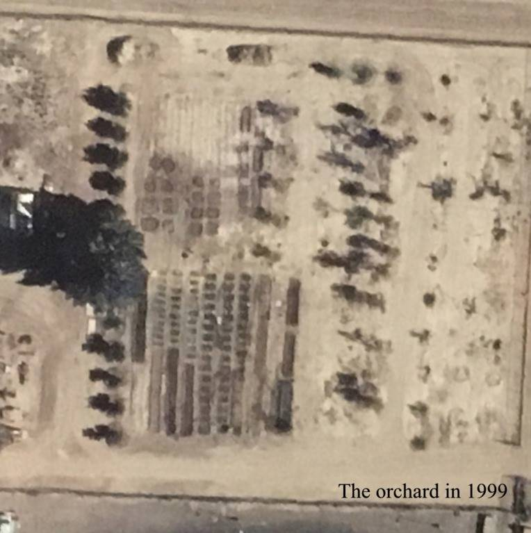 1999 Orchard