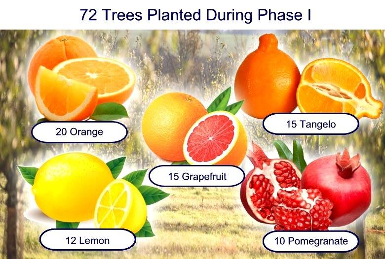 72 Trees Planted During Phase I